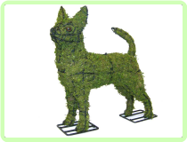 Chihuahua Animal Topiary Frame