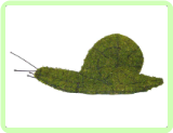 "Snail Animal Topiary Mossed Frame 6"" x 49"" x 6"""