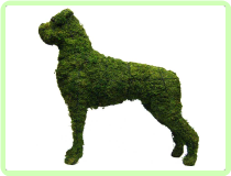 "Boxer Animal Topiary Frame (Mossed) 31""x 34""x 10"""
