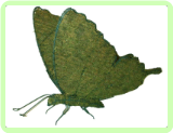 Butterfly Insect Topiary Frame